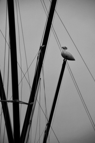 Gull and masts