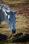 Pony drinking 5
