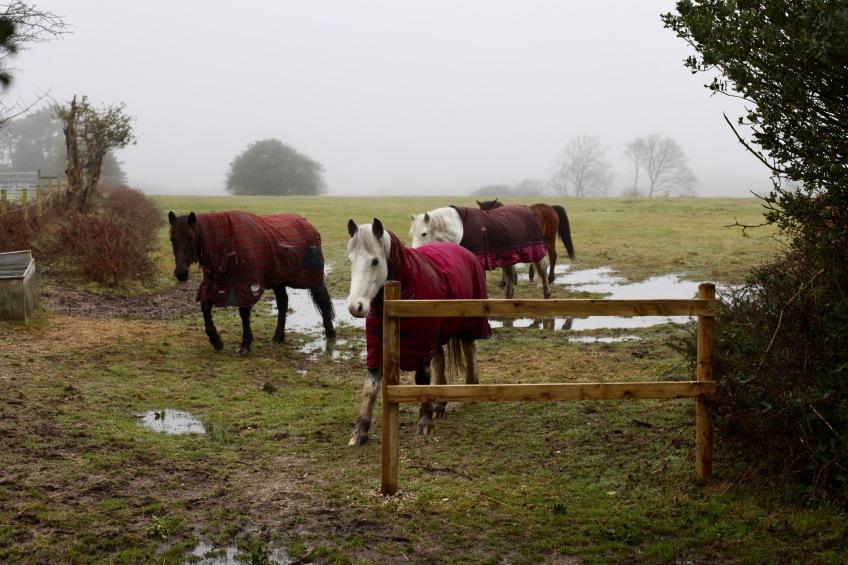 Horses in rugs 2