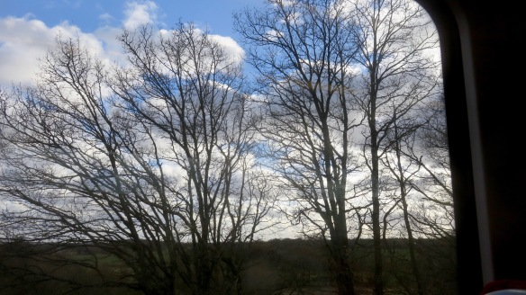 Trees from train