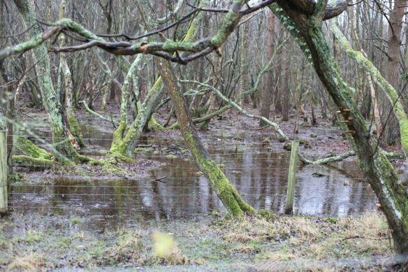 Flooded woods 1
