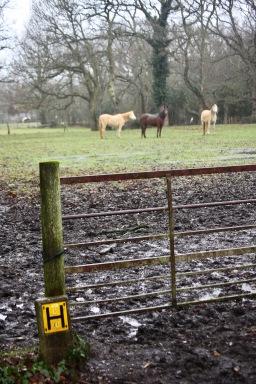 Muddy entrance to paddock