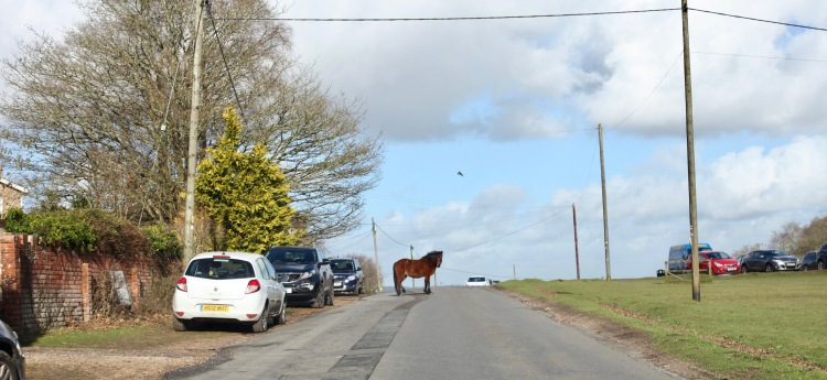 Pony on Road 1