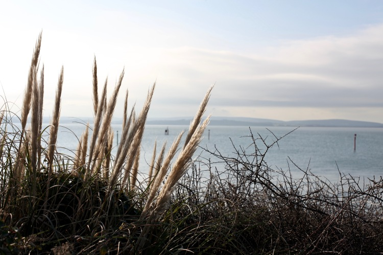 Grasses by sea