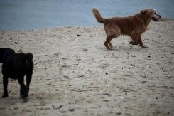 Dogs on beach 1