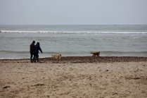 Couple and dogs on beach 2