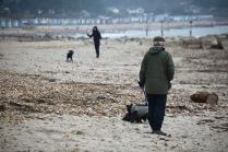 Dog walkers on beach
