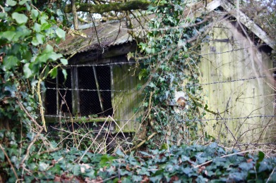 Derelict shed 2