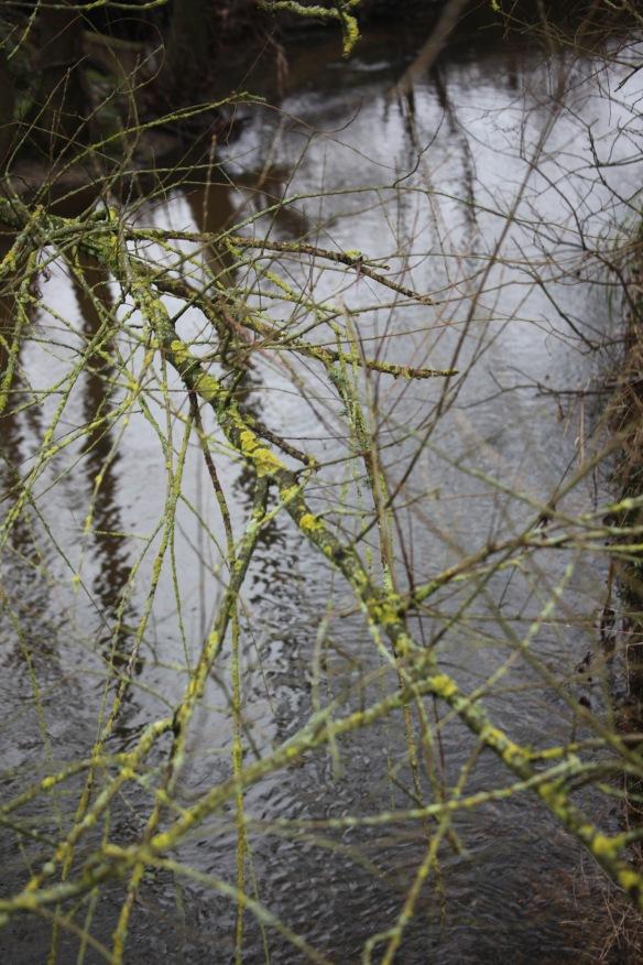 Lichen over Avon stream