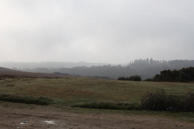 Landscape in mist 1