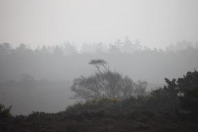 Landscape in mist 3