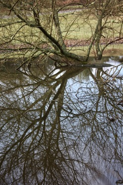 Trees reflected in pool 1