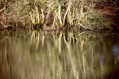 Trees reflected in pool 2