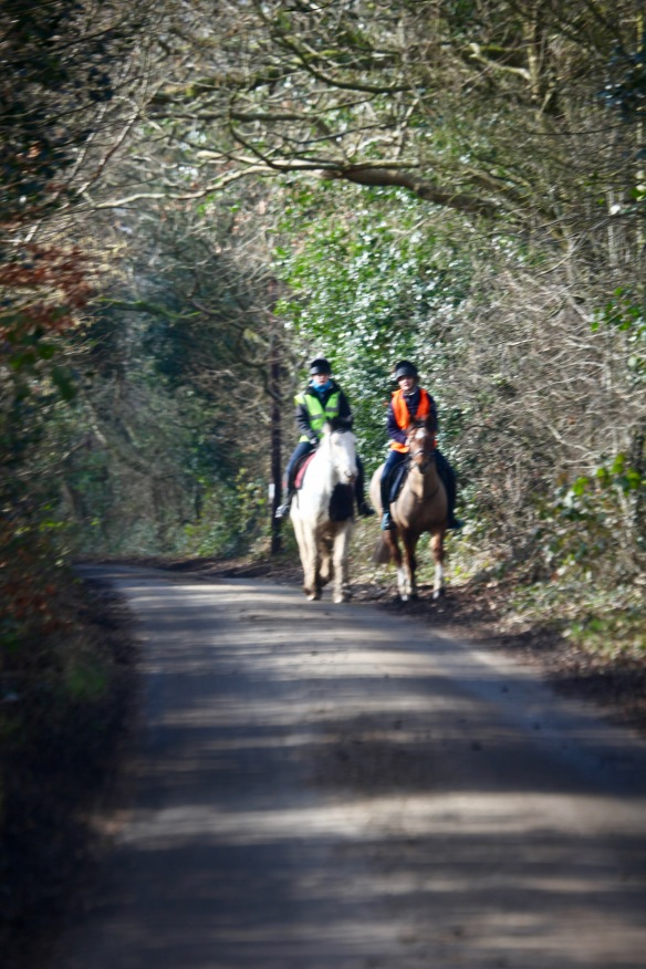 Horse riders on Forest Road