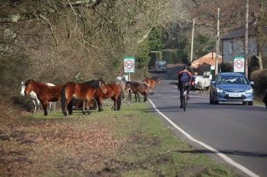 Ponies and traffic 1