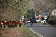 Ponies and traffic 2