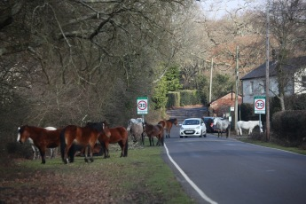 Ponies and traffic 3