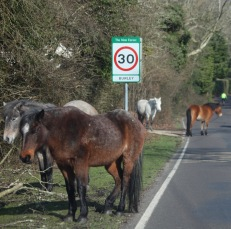Ponies and cyclist