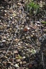 Twigs on Heligan Path