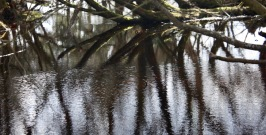 Trees reflected in pools 3