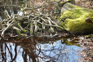 Trees reflected in pools 6