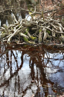 Trees reflected in pools 7
