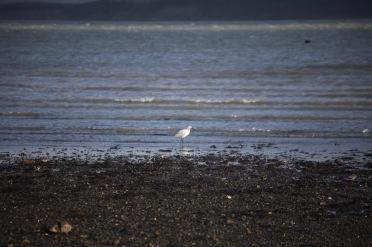 Egret 1