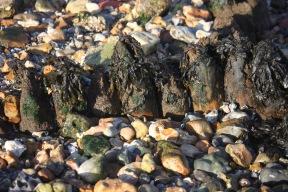 Seaweed, breakwater, pebbles