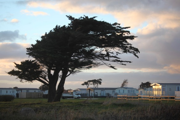 Tree and holiday homes