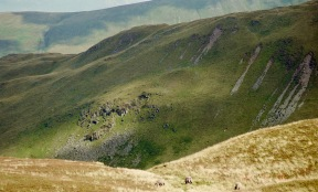 Place Fell with sheep 18.8.92