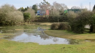 Waterlogged landscape 1