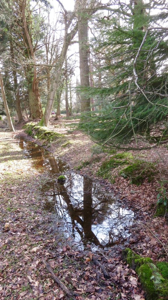 Reflections in ditch 1
