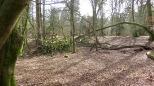Fallen tree 2