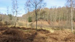 Forest scene 4