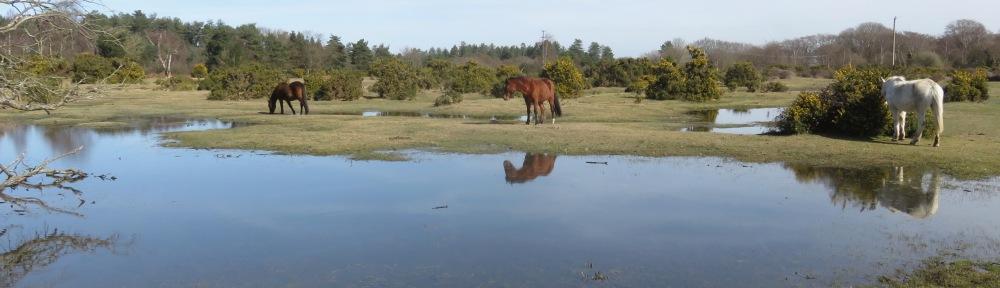 Ponies beside pool 1