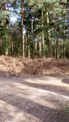 Norley Wood car park