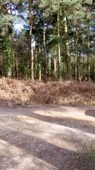 Norley Wood car park