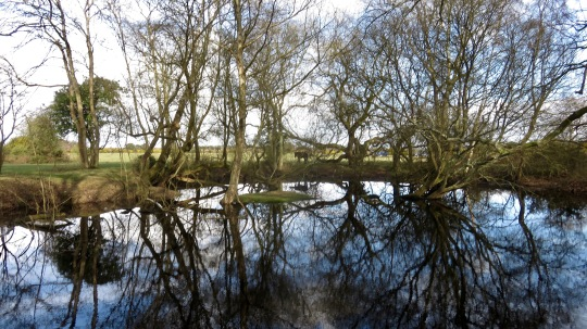 Trees reflected 1