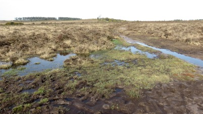 Moor from Whitton Pond