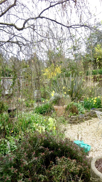 Garden through weeping birch to Elizabeth's Bed 1