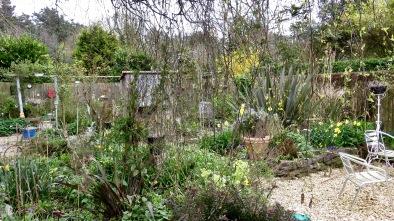 Garden through weeping birch to Elizabeth's bed 2