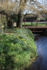 Bridge, stream, daffodils, willow 1
