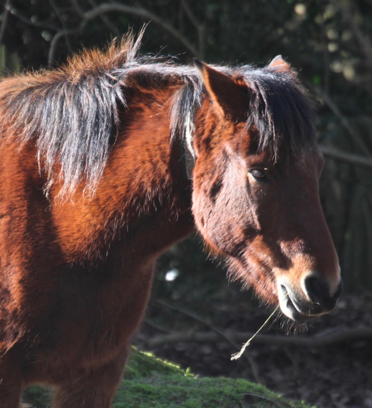 Ponies 5 – Version 2