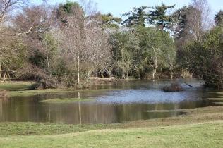 Flooded landscape 1