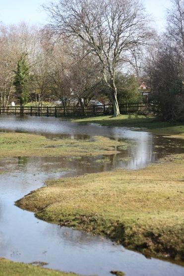 Flooded landscape 6