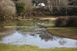 Waterlogged landscape 3