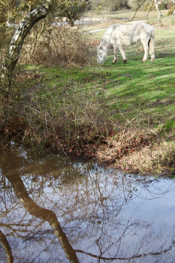 Reflected tree and pony