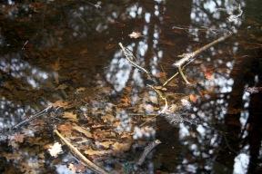 Waterlogged forest terrain 1