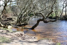 Highland Water 1