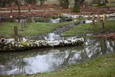 Waterlogged landscape 2